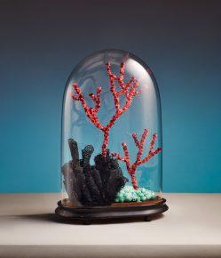 poumons-des-oceans_25_corallium-rubrum-favia-sertella-septentrionalis-878x1024
