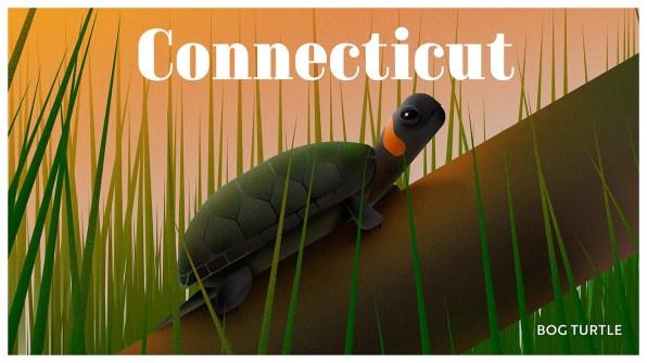Endangered Animals Moss and Fog Connecticutt