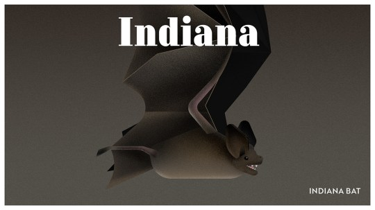 Endangered Animals Moss and Fog Indiana