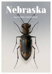 Endangered Animals Moss and Fog Nebraska