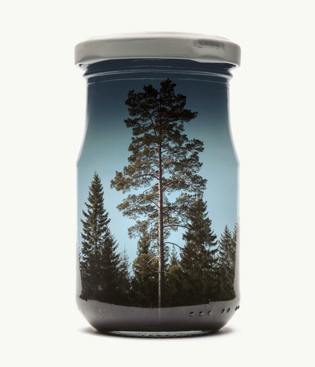 Pine+Tree