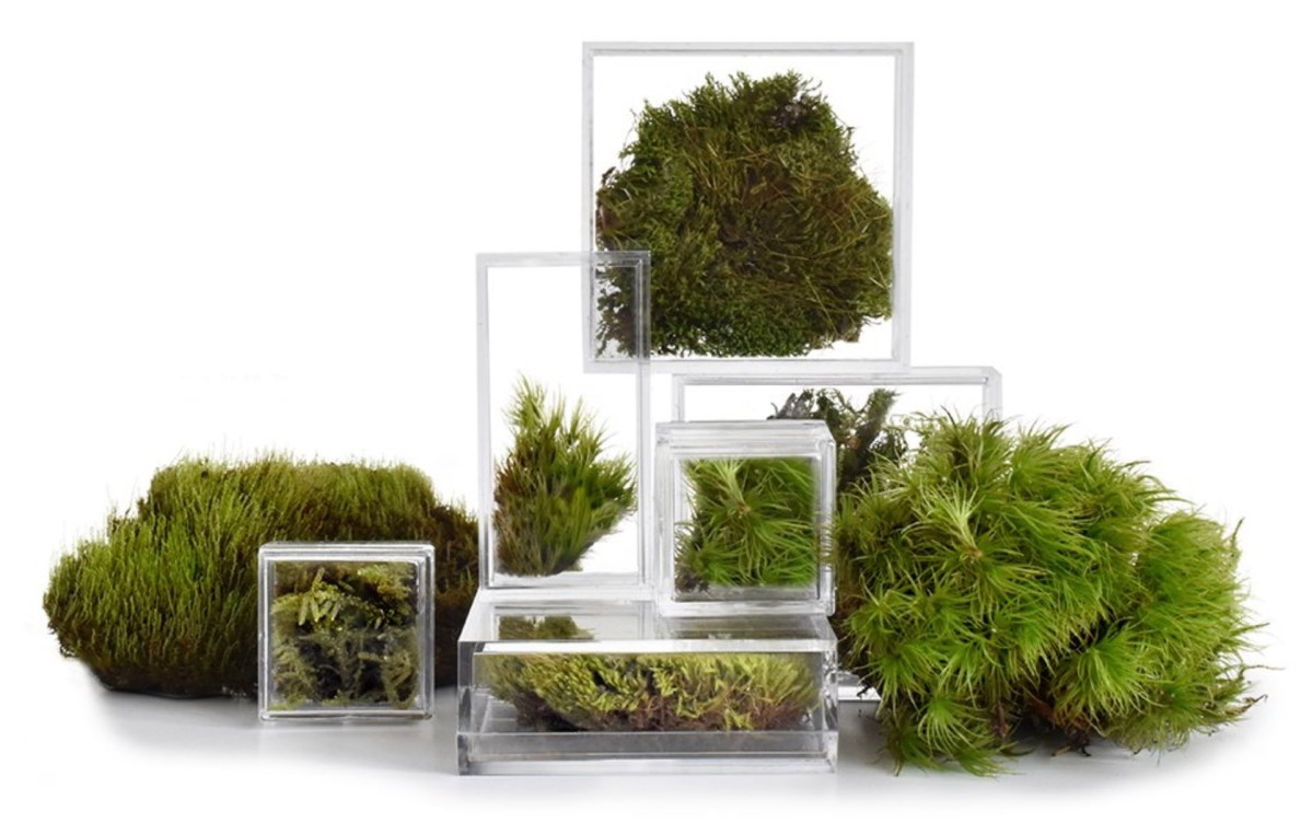 Level Scapes Micro Terrariums