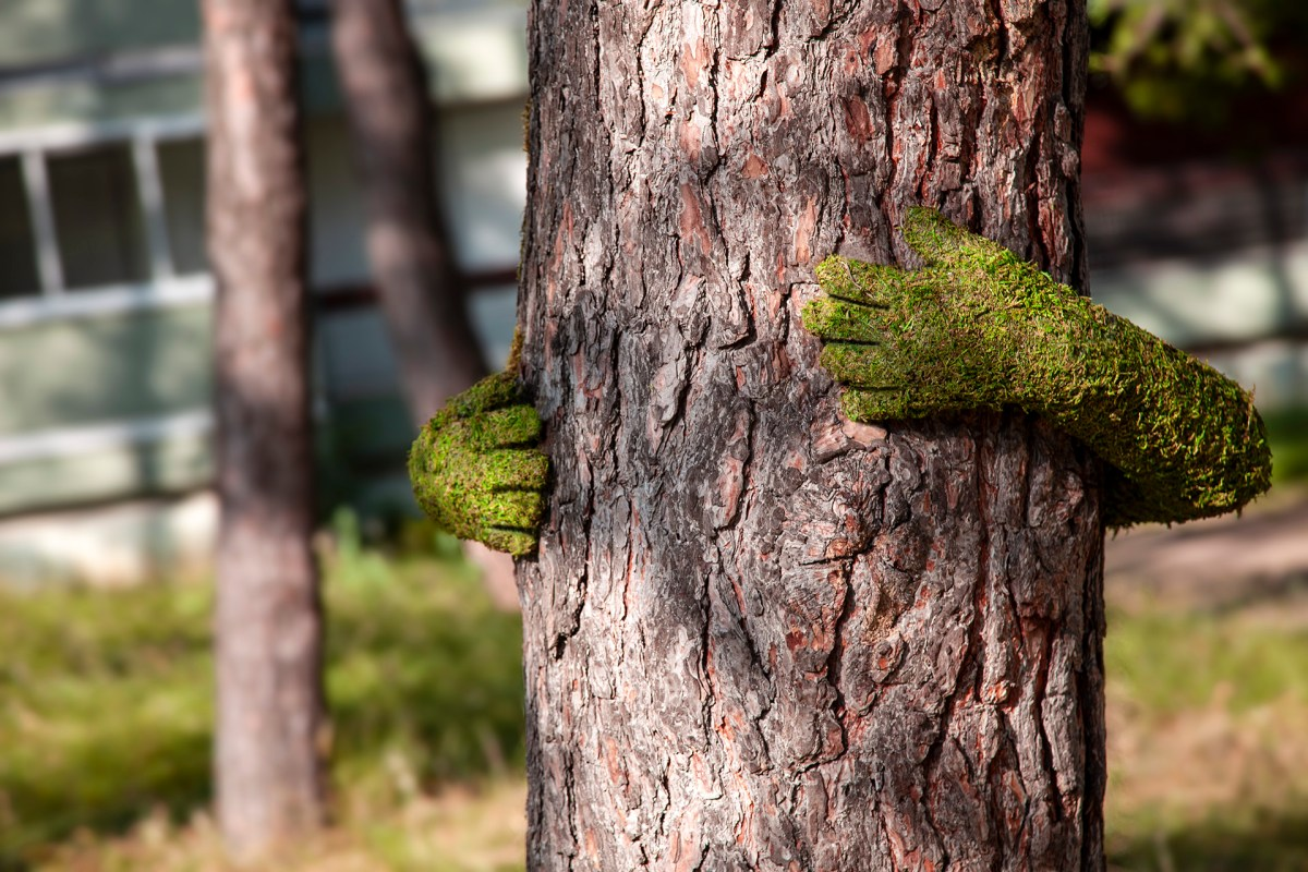 TreeHug_Monsieur_Plant_Annecy_paysages_2019
