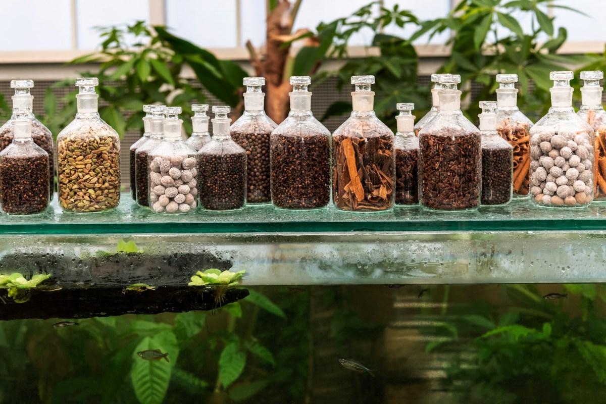 babylonstoren-spice-garden-moss-and-fog-4