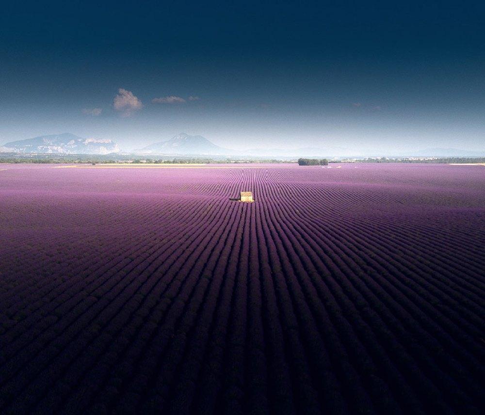 lavender-field-aerial-photography-samir-belhamra-5d5fa049d5615__880