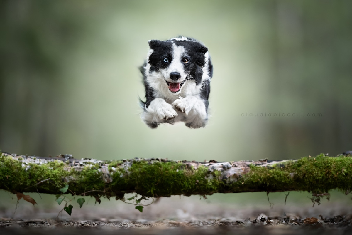 claudio-piccoli-dogs-in-action-6