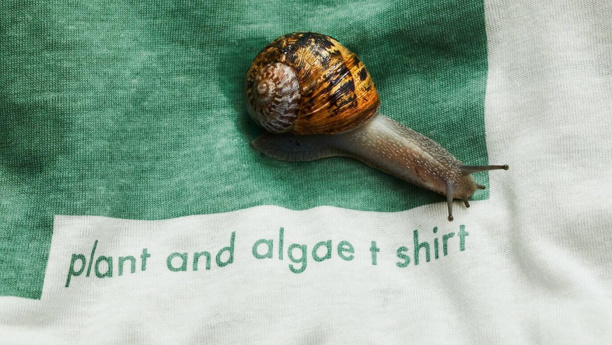 plant-and-algaet-2-1376-1376x776