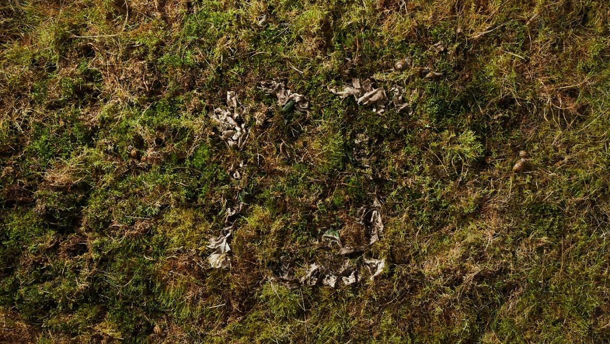 plant-and-algaet-302-1376-1376x776