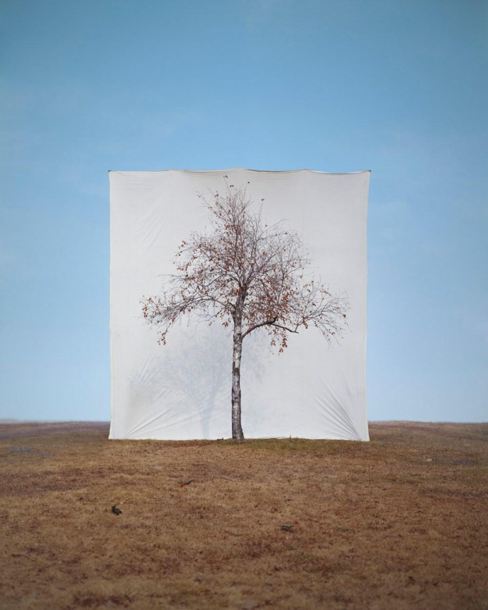 Framed trees in their habitat