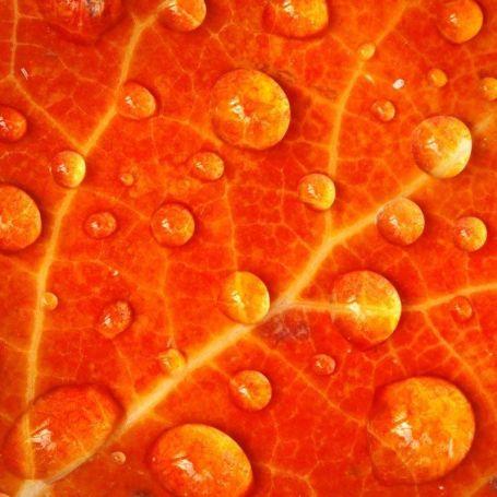 Orange iPad Wallpaper 23