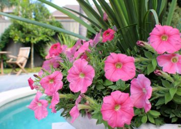 Poolside petunias.