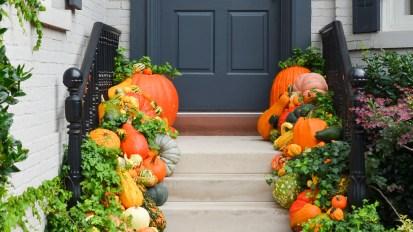 Fall Annuals  Seasonal Color