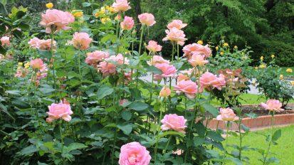 Spring Annuals  Seasonal Color