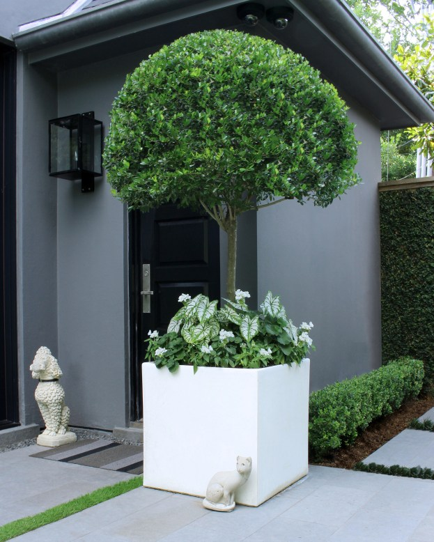 We love this Ligustrum planter! White Geraniums, Pentas and Caladiums are so elegant beneath the canopy.