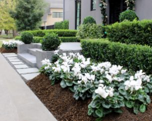 White Cyclamen Entrance