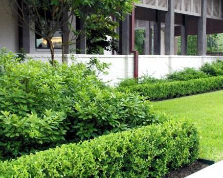 Azalea Boxwood Hedge