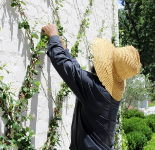 Training a diamond trellis