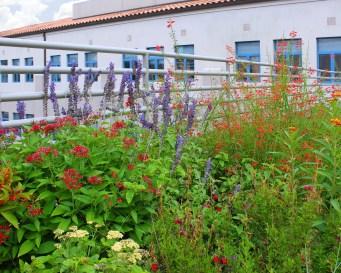 AOS Learning Garden - 3