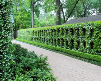 Jasmine Grid Driveway