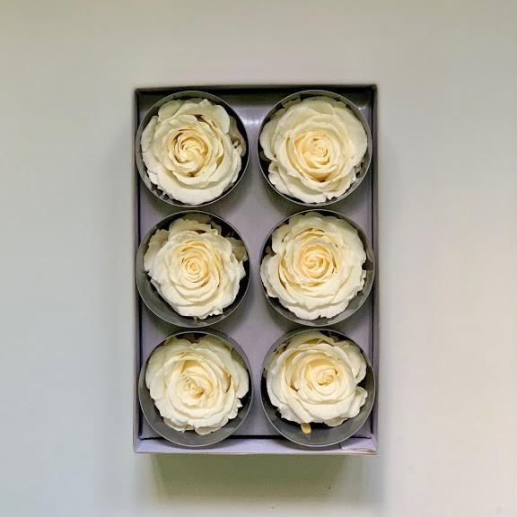 розая белая45