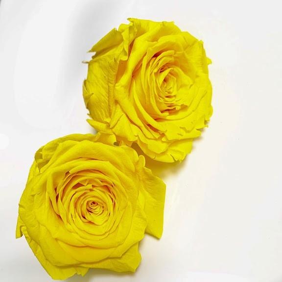 роза желтая11