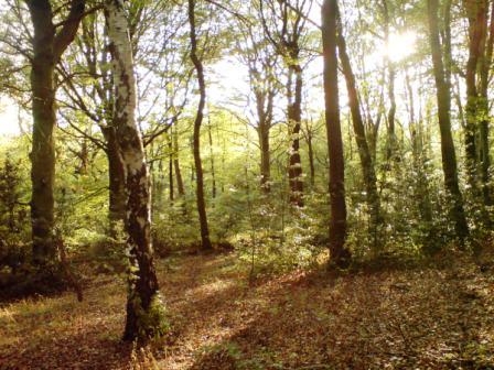 Moss Valley Wildlife Group