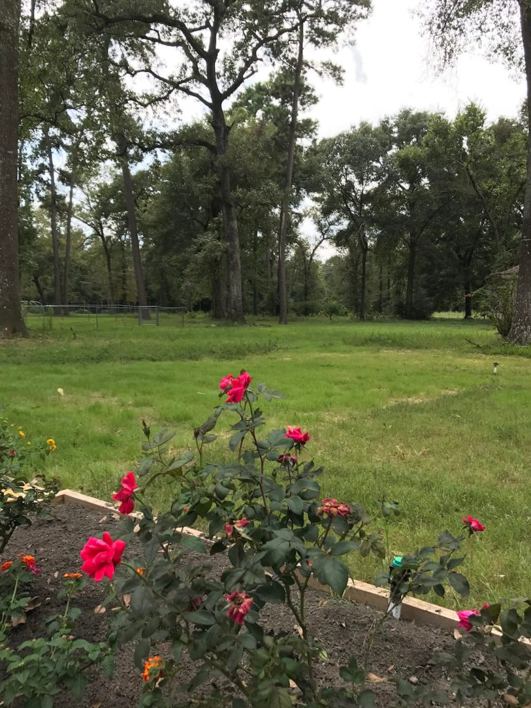 Our Beautiful 1.25 Acre of Backyard
