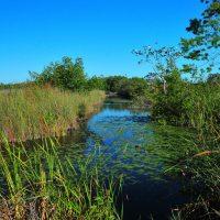 A Taste of Cuba - Birding with Ernesto : Zapata Peninsula