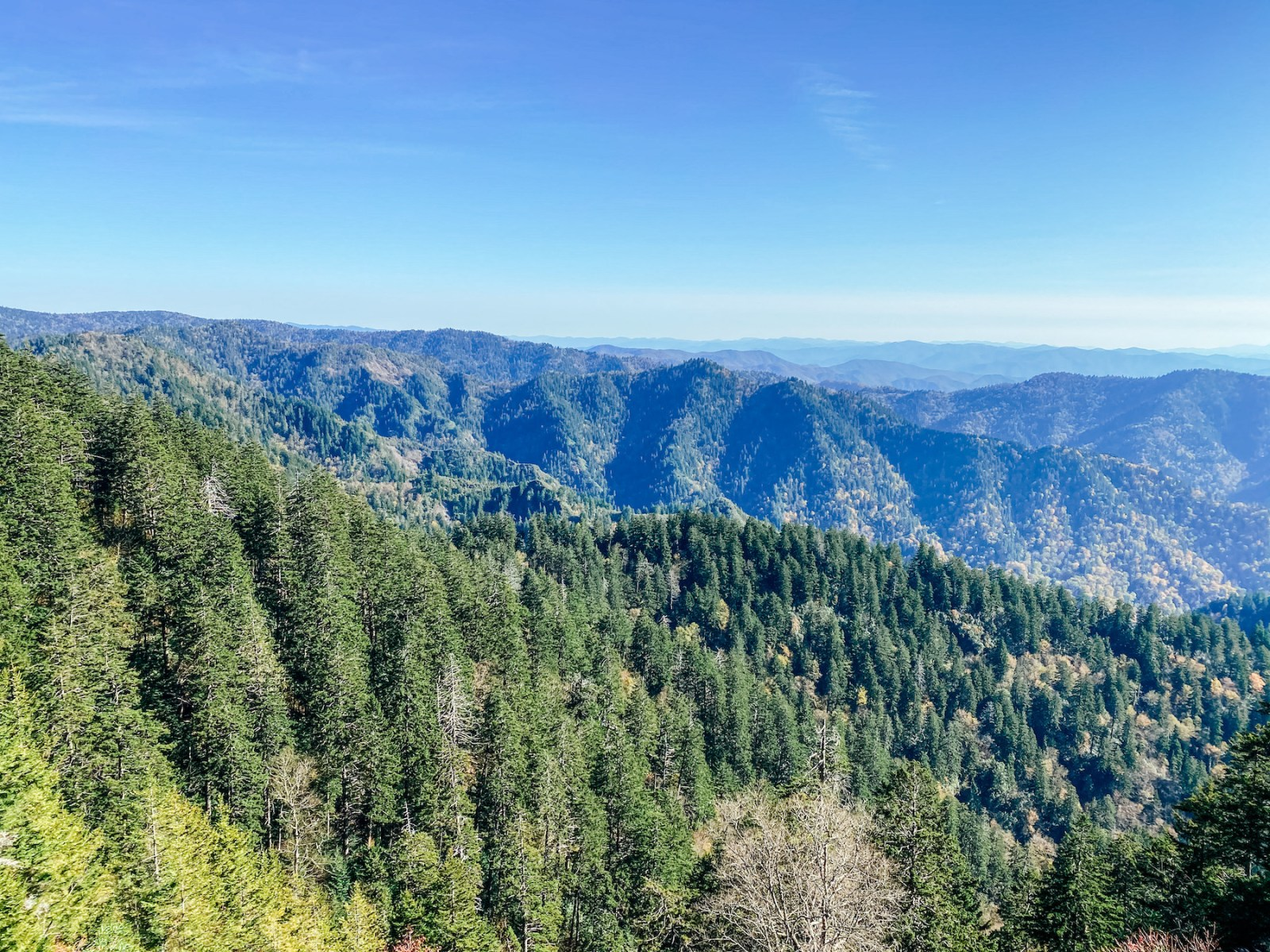Smoky Mountains | What are Carbon Offsets?