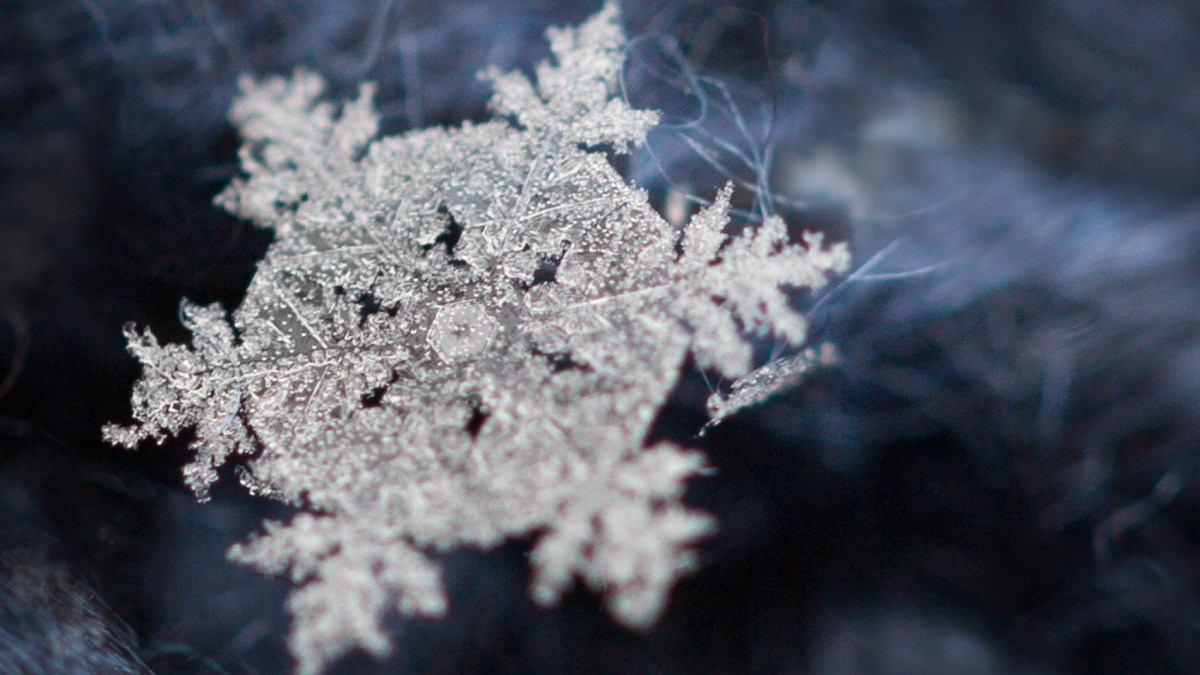 How to photograph snowflakes with a macro lens