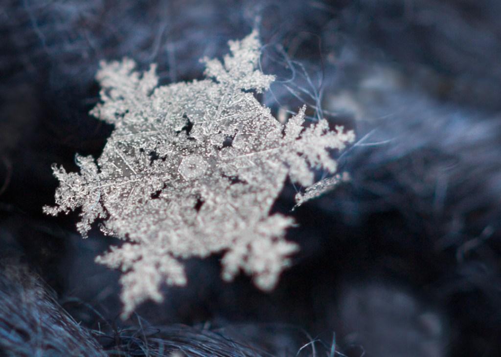 snowflakemacroforblog4