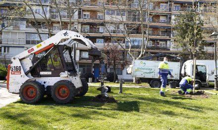 El Ayuntamiento de Móstoles comienza la replantación de los árboles dañados por el temporal Filomena
