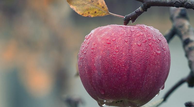 Manzana del río Puelo.