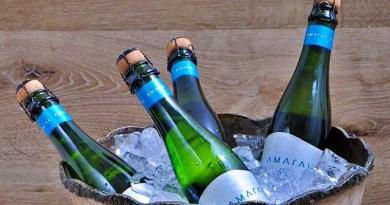 La nueva línea de vinos costeros de viña MontGras se llama Amaral