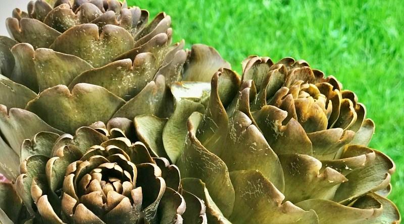 Conocer la temporada de alcachofas es tan importante como saber seleccionarlas y prepararlas adecuadamente