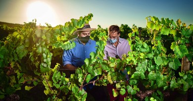 Durante marzo y abril, quienes disfrutan del enoturismo tendrán la oportunidad de disfrutar de paseos en torno a las viñas y su cultura.