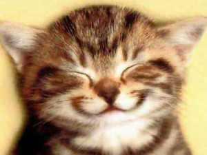 02ネコ笑い