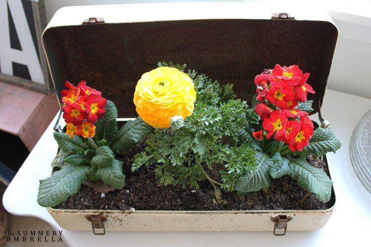 repurposed ideas. planter ideas, gardening