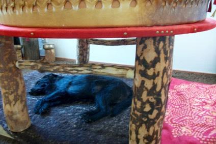 Hund Neo relaxt unter der Muttertrommel