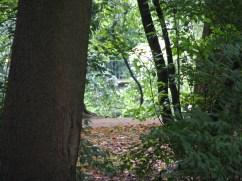 Lazienki Park (16)