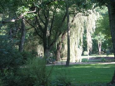 Lazienki Park (5)
