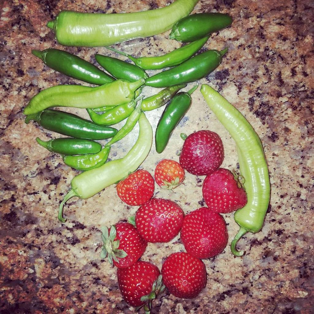 Todays harvest! yum peppersgalore organic gardening