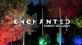 descanso gardens enchanted forest