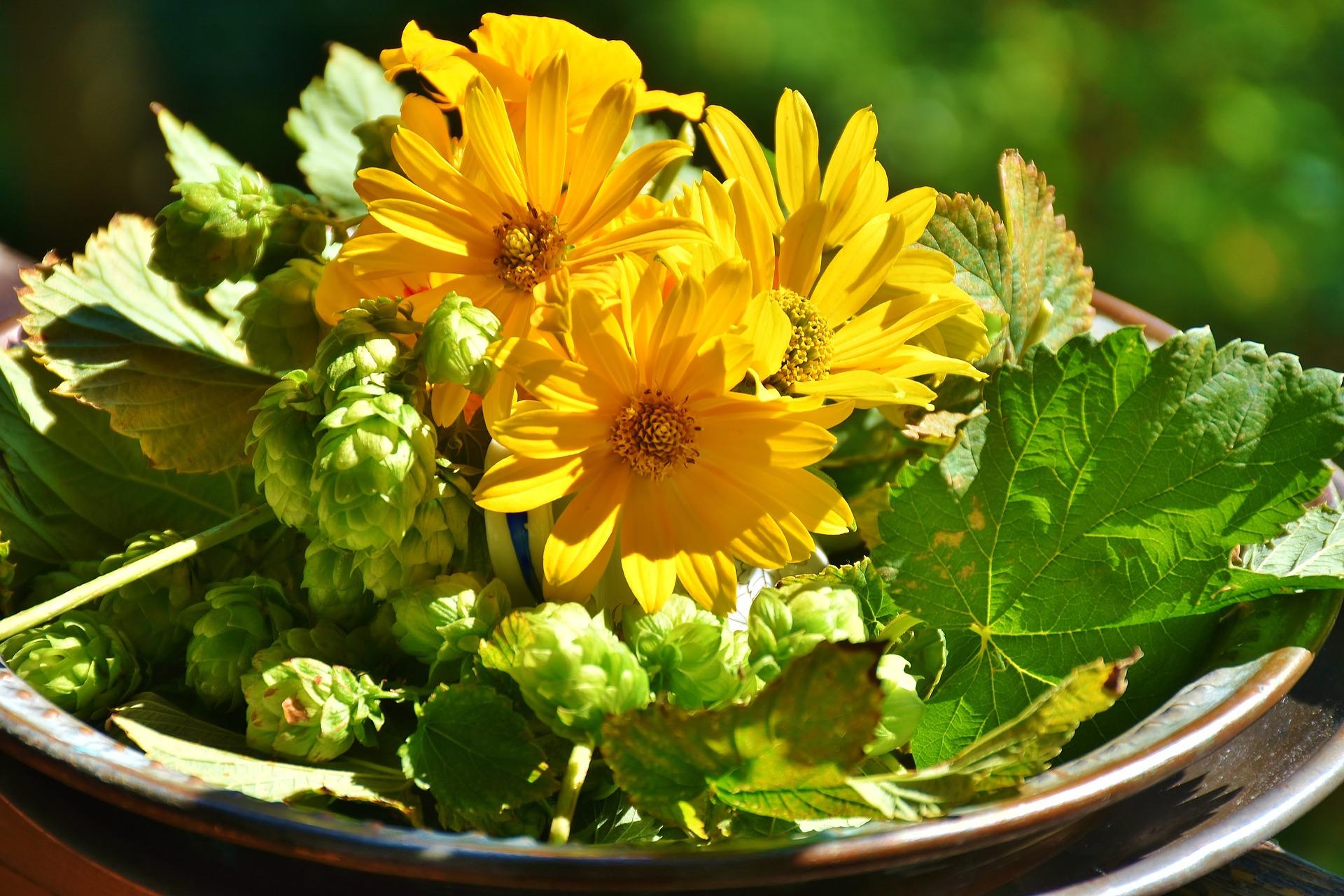 Hops Flower Mother Jai S