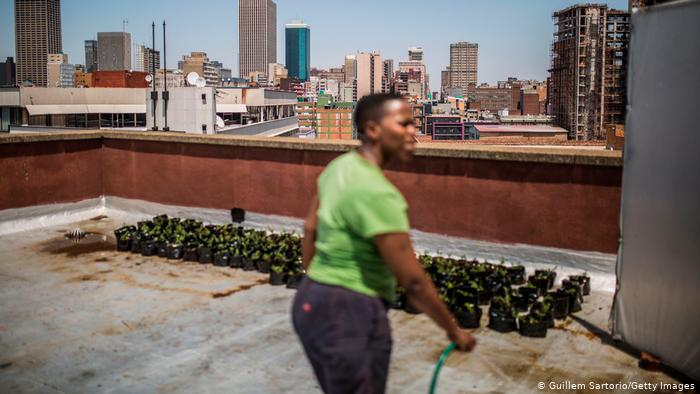 Lethabo Madela, 30, waters saplings on a rooftop in Johannesburg