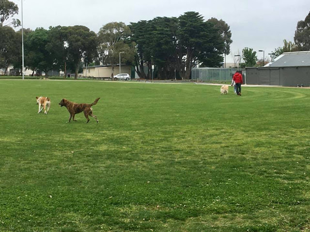 Hosken Reserve: grass oval used for soccer training, informal recreation, off-lead dog exercise