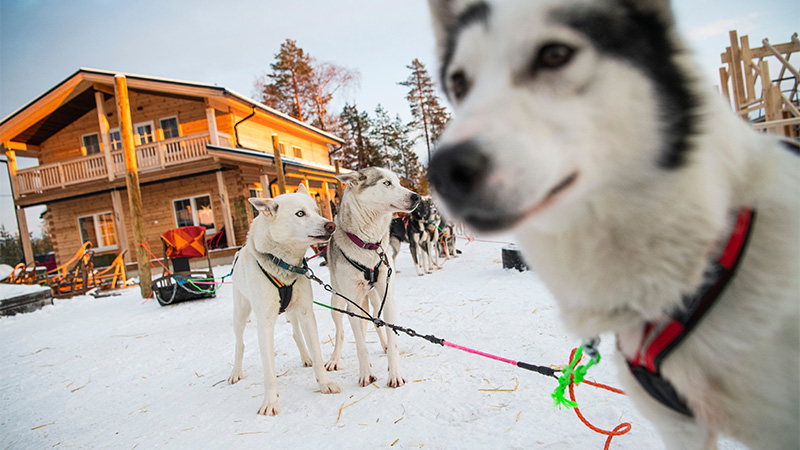 FINLAND-CHRISTMAS-TOURISM-ENVIRONMENT-LAPLAND-LEISURE