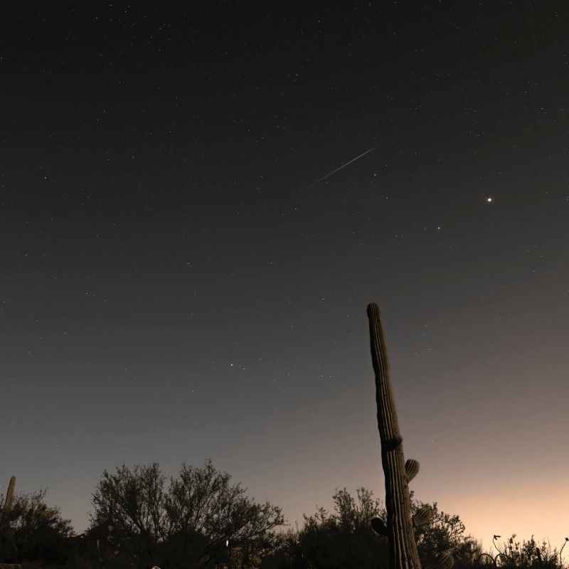 A southwestern U.S. scene, with a seguaro cactus in silhouette, and a meteor in the sky.