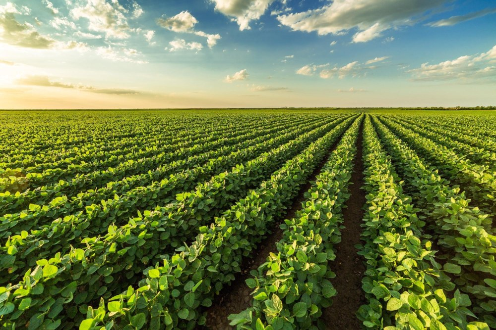 Solar Geoengineering can Mitigate Effects of Global Warming on Rainfed Crops