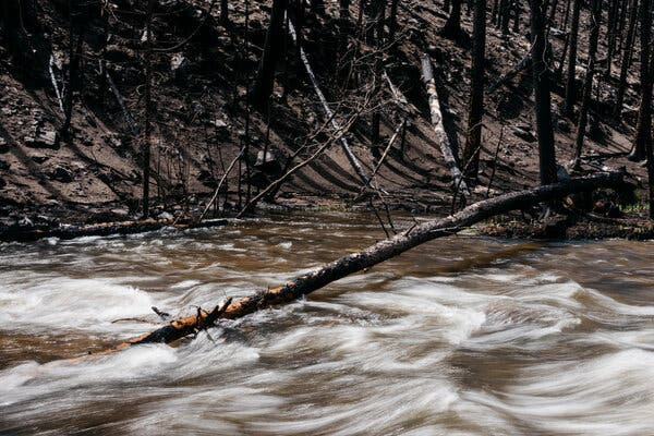 A river connecting to the Poudre River Watershed in Colorado in May.
